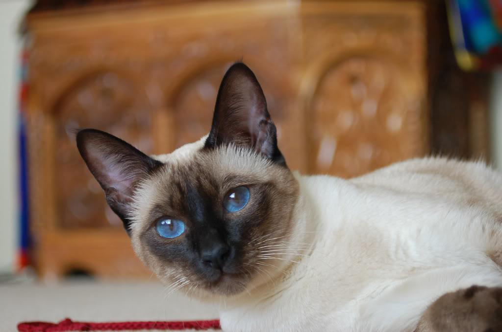 kucing dan pendapatan ke 20 dari jobdirumah