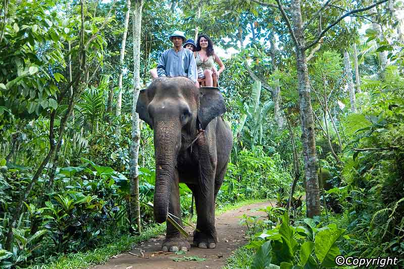 bali elephant ride tour di destinasi honeymoon impian