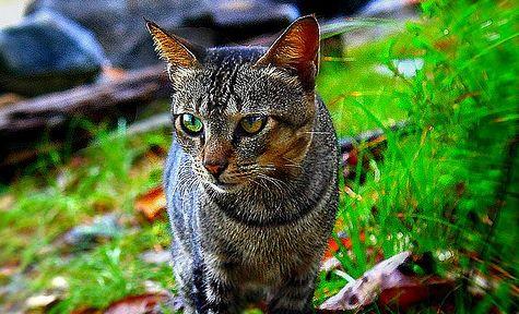 kucing dan pendapatan ke 22 dari jobdirumah