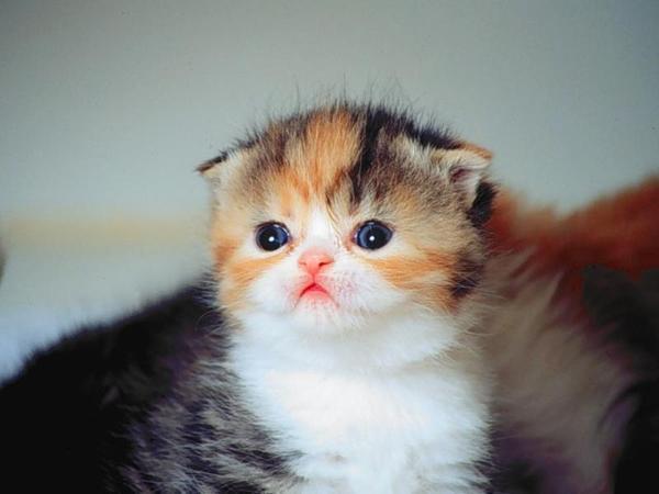kucing dan pendapatan ke 23 dari jobdirumah