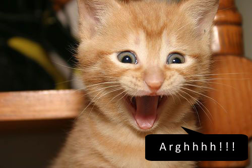 kucing-terkejut