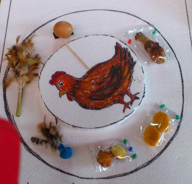 kepentingan ayam